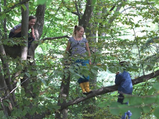 Klettern auf dem Lieblingsbaum