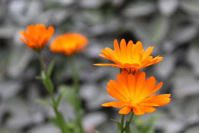 geheimnisse und heilkraft der pflanzen